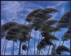 تعبیر خواب باد , تعبیر خواب وزش باد , تعبیر خواب باد وزیدند , تعبیر خواب باد و خاک