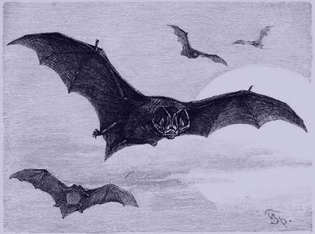تعبیر خواب خفاش , تعبیر خواب خفاش در خانه, تعبیر خواب خفاش سفید , تعبیر خواب خفاش مرده