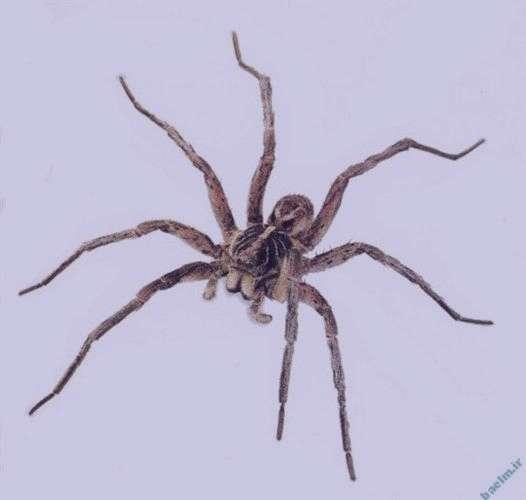 تعبیر خواب عنکبوت , تعبیر خواب عنکبوت بزرگ , تعبیر خواب عنکبوت سیاه , تعبیر خواب عنکبوت زرد