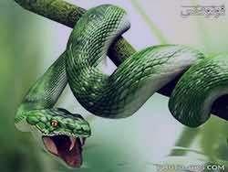 تعبیر خواب مار , تعبیرخواب مار , تعبیر خواب مار سیاه سفید سبز کوچک