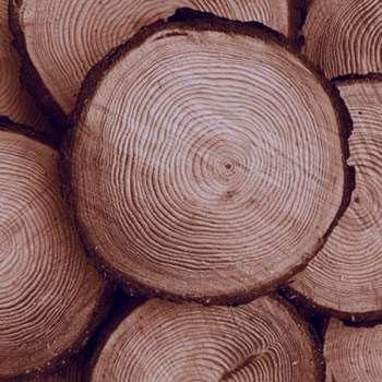تعبیر خواب چوب , تعبیر خواب چوب خشک , تعبیر خواب چوب در خانه