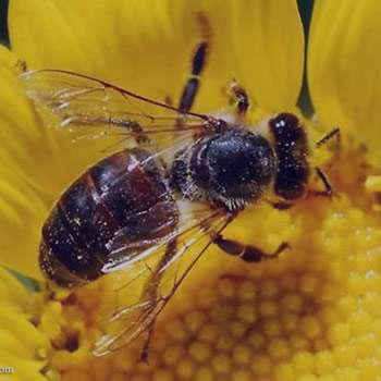 تعبیر خواب زنبور , تعبیر خواب دیدن زنبور , تعبیر خواب زنبور عسل