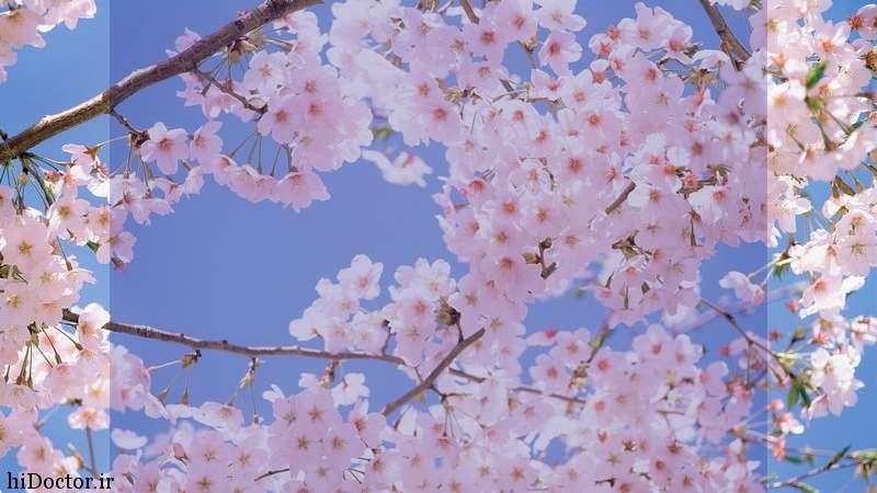بهار , اس ام اس بهار , شعر بهار , جمله در مورد بهار , جملات بهار