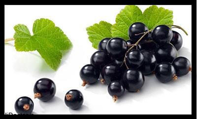 انگور سیاه , خواص انگور سیاه , فواید انگور سیاه , انگور سیاه و دیابت , انگور سیاه در بارداری