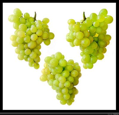 انگور , خواص انگور , فواید انگور , انگور و بارداری , انگور و دیابت , انگور و سرما خوردگی