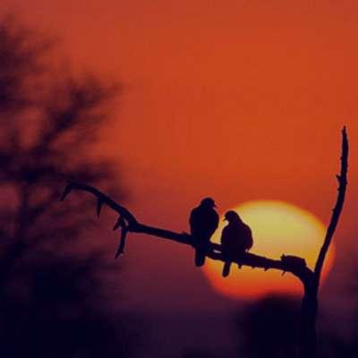شعر در مورد هجران