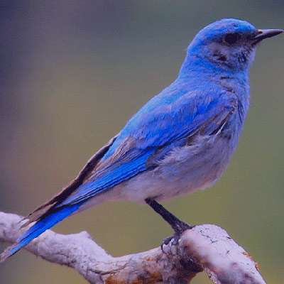 شعر در مورد پرنده