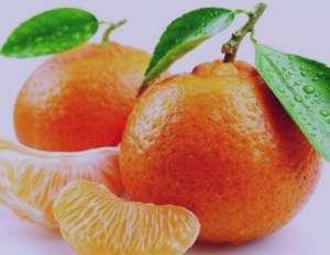طرز تهیه تارت نارنگی , تارت نارنگی , تارت