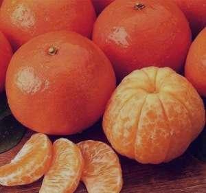 طرز تهیه دسر نارنگی , دسر نارنگی , دستور تهیه دسر نارنگی
