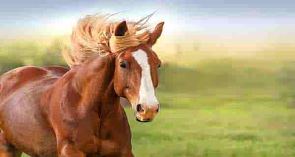 شعر در مورد اسب