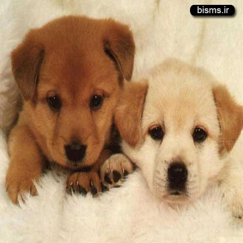 مرجع کامل تعبیر خواب سگ سیاه و سفید و زرد و هار و مرده