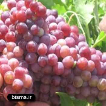 انگور قرمز ، خواص انگور قرمز ، انگور قرمز در بارداری , انگور قرمز و دیابت , انگور قرمز برای کودکان