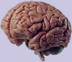 علل آب آوردن مغز