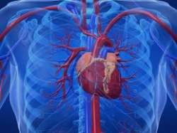 بیماری اندوکاردیت (علایم و درمان بیماری)