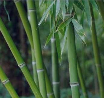 خواص و مضرات مصرف پودر تباشیر برای کیست تخمدان