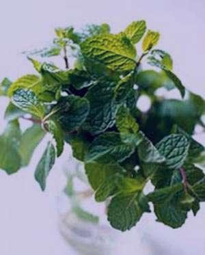 محافظت از پوست با مصرف برگ گیاهان