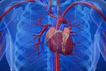 7 عاملی که خطر ابتلا به بیماری های قلبی را افزایش می دهد