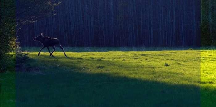 زیباترین و شیک ترین تصاویر طبیعت+ عکس طبیعت بکر