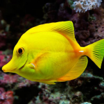 """مرجع کامل """"تعبیر خواب ماهی"""" قرمز مرده خوردن"""