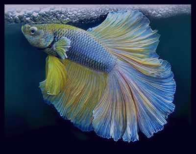 """تعبیر خواب خوردن گوشت انسان مرده تعبیر خواب ماهی   کاملترین و جدیدترین مرجع """"تعبیر خواب ..."""