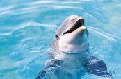 تعبیر خواب دلفین