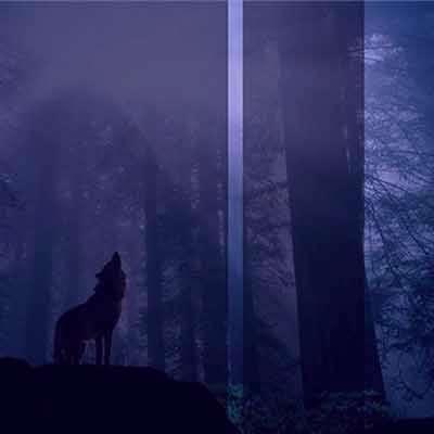 عکس گرگ با متن زیبا درباره گرگ برای پروفایل