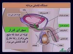 اندازه طبیعی بیضه , اندازه طبیعی بیضه ها در مردان , اندازه طبیعی بیضه نوزادان , اندازه طبیعی بیضه چقدر است؟