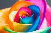 گالری دانلود عکس گل زیبا متحرک برای تولد تسلیت متن دار برای پروفایل