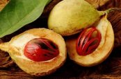 خواص درمانی گیاه جوز هندی و لاغری شکم با داروی گیاهی