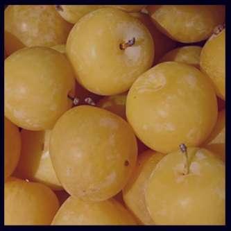 آلو زرد , خواص آلو زرد , آلو زرد و دیابت , آلو زرد و بارداری , کالری آلو زرد