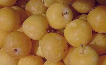 خواص آلو زرد چیست,خاصیت آلو زرد چیست,آلو زرد و دیابت,آلو زرد برای دیابت