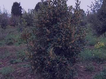 کاربرد برگ بو در غذا , برگ بو در غذا , برگ بو در چه غذاهایی استفاده می شود , استفاده برگ بو در غذا