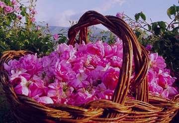 گل محمدی برای یبوست , گل محمدی برای یبوست خوبه , گل محمدی برای یبوست خوب است , خواص گل محمدی برای یبوست