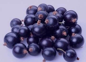 انگور سیاه در بارداری , خواص انگور سیاه در بارداری , خوردن انگور سیاه در بارداری , مصرف انگور سیاه در بارداری