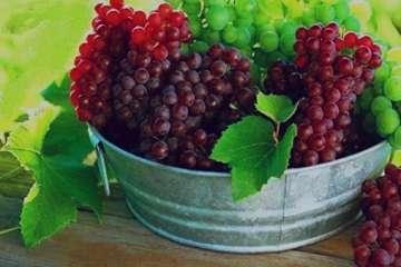 انگور یاقوتی , انگور یاقوتی به انگلیسی , انگور یاقوتی+خواص , انگور یاقوتی سیستان