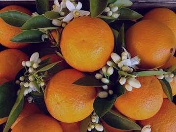خواص بهار نارنج , خواص بهار نارنج برای پوست , خواص بهار نارنج فشار خون , خواص بهار نارنج شیراز