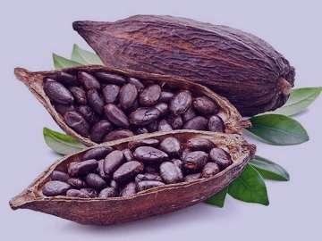 خواص کاکائو , خواص کاکائو برای پوست , خواص کاکائو تلخ , خواص کاکائو در خواب