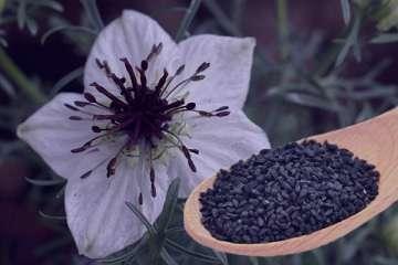 سیاه دانه چیست , خاصیت سیاه دانه و عسل چیست , فواید سیاه دانه چیست , گیاه سیاه دانه چیست