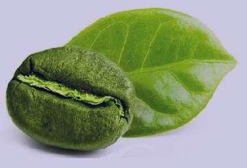 قهوه سبز در زمان شیردهی , قهوه سبز در دوران شیردهی , مصرف قهوه سبز در دوران شیردهی , خوردن قهوه سبز در دوران شیردهی