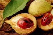 مقدار مصرف جوز هندی خواص دارویی و درمانی