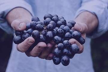خواص انگور سیاه برای زنان باردار , انگور سیاه در بارداری , خواص انگور سیاه در بارداری , خوردن انگور سیاه در بارداری