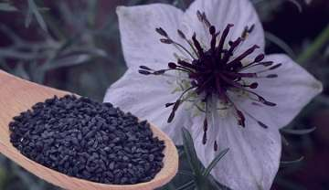 خواص سیاه دانه در طب سنتی , سیاه دانه طب سنتی , سیاه دانه در طب سنتی , خواص سیاه دانه طب سنتی
