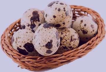فواید تخم بلدرچین , تخمه بلدرچین , تخمه بلدرچین , خواص تخمه بلدرچین