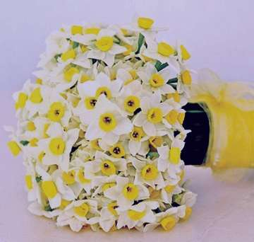 کاشت گل نرگس , کاشت گل نرگس در باغچه , کاشت گل نرگس شیرازی , کاشت گل نرگس به صورت دیم