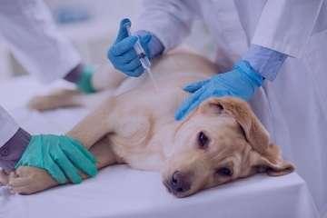 اسهال خونی در سگ , اسهال خونی در سگ بالغ , اسهال خونی در سگ , اسهال خونی در سگها