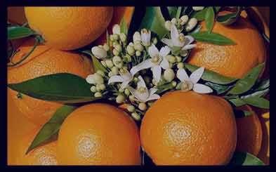 نارنج و پوست صورت ، نارنج برای پوست صورت ، اب نارنج و پوست صورت ، نارنج پوست صورت ، عرق بهار نارنج و پوست صورت
