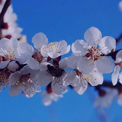 شعر در مورد آمدن بهار