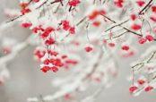 گلچین زیباترین شعر در مورد آمدن زمستان