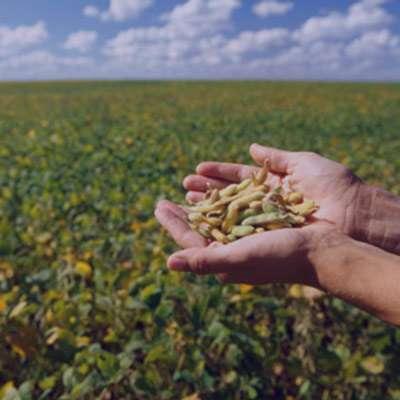 گلچین زیباترین شعر در مورد بذر
