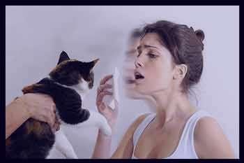 آلرژی به گربه , علائم آلرژی به گربه , آلرژی به موی گربه , نشانه های آلرژی به گربه